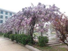 湖北第二师范学院(校园一角)